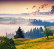 Mistige de zomerzonsopgang in bergen Stock Afbeelding