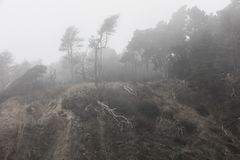 Mistige Kust van Noordelijk Californië in Sonoma stock foto's