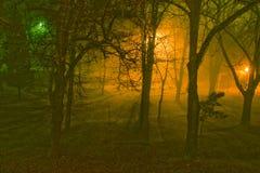Mistige nacht in een park.   royalty-vrije stock afbeeldingen