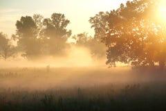Mistige ochtend Stock Foto
