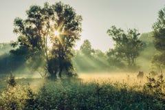 Mistige ochtend royalty-vrije stock afbeeldingen