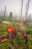Mistige ochtend in dood bos Stock Afbeeldingen