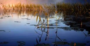 Mistige ochtend door het meer stock afbeeldingen