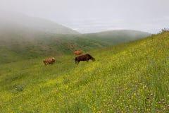 Mistige ochtend op de hellingen van de bergen Royalty-vrije Stock Foto's