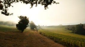Mistige ochtend op een gebied in aard met de zonnebloemenbomen en de installaties in Lezing, Zuid-Frankrijk royalty-vrije stock afbeelding