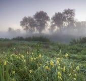 Mistige ochtend op een groene weide met gele bloemen stock afbeeldingen