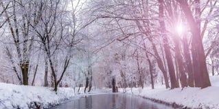 Mistige ochtend in stadspark Royalty-vrije Stock Foto's