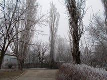 Mistige ochtend, vorst op de bomen, straten in Nikolaev Stock Foto's