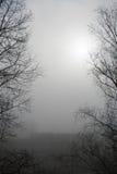 Mistige ochtendmening met zon en zwarte boomsilhouetten Royalty-vrije Stock Foto