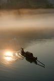 Mistige rivier in zonsopgang royalty-vrije stock foto