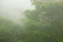 Mistige Tropische Wildernis stock foto's