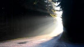 Mistige zonsopgang in een bosweg stock videobeelden