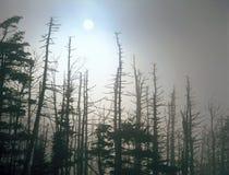 Mistige zonsopgang op Forney-Rand, het Nationale Park van Great Smoky Mountains, Noord-Carolina royalty-vrije stock foto's