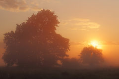 Mistige zonsopgang op weide Royalty-vrije Stock Afbeelding