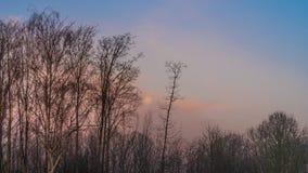 Mistige zonsopgang over meer stock fotografie