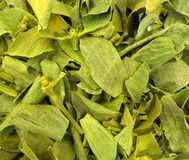 Mistletoe высушил листья Стоковая Фотография RF