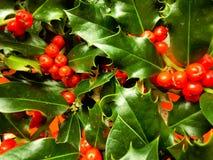 mistletoe Arkivfoto
