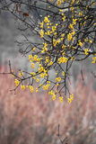 mistletoe стоковая фотография rf