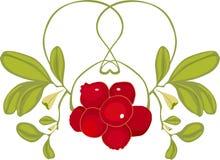 mistletoe vektor illustrationer