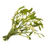 mistletoe Стоковое Изображение