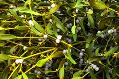 mistletoe Стоковые Фотографии RF