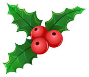 Mistletoe Stock Photos