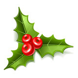 Mistletoe stock illustration