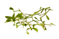 Mistletoe. Branch with berries isolated on white royalty free stock photos