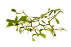 Mistletoe Royaltyfria Foton