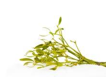 mistletoe Стоковое Фото