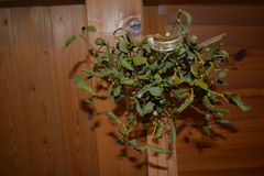 mistletoe Stock Afbeelding