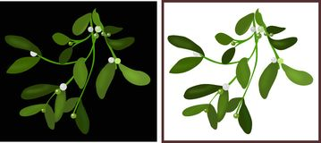 Mistletoe branch. Illustration of a branch of mistletoe in white and black backgrounds Royalty Free Stock Image