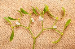 Mistletoe branch Stock Image