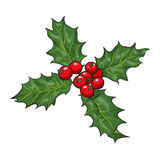 Mistletoe branch with leaves and berries. Holly berry Christmas decoration element, sketch vector illustration on white background. , Xmas decoration Royalty Free Stock Photo