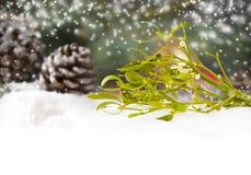 Mistletoe branch Stock Photos