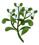 Mistletoe branch. Vector illustration. Royalty Free Stock Photos