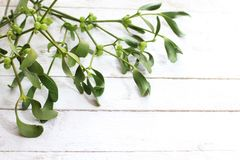 Mistletoe branch on white boards. The picture shows a mistletoe branch on white wooden boards stock photography
