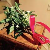 Mistletoe bundle Stock Photo