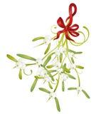 Mistletoe, christmas Stock Photos