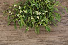 Mistletoe. Christmas mistletoe plant with berries over oak background royalty free stock images