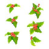 Mistletoe Christmas plants set with leaves and fruit. Holly berry decoration collection. Royalty Free Stock Photo