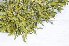 mistletoe fotografie stock libere da diritti