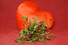 Mistletoe flower on red background heart Royalty Free Stock Photo