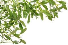 Mistletoe frame. Mistletoe border isolated on white Royalty Free Stock Image