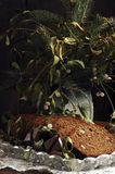 mistletoe gingerbread рождества Стоковое Фото