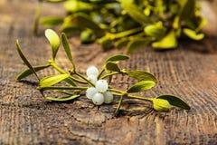Mistletoe herb royalty free stock photography