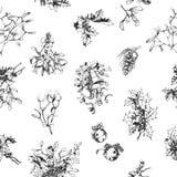 Mistletoe and holly Stock Image