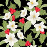 Mistletoe holly berry Christmas rose pattern black Royalty Free Stock Photos