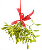 Mistletoe. Isolated on a white background royalty free stock photography