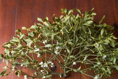 mistletoe royalty-vrije stock afbeeldingen